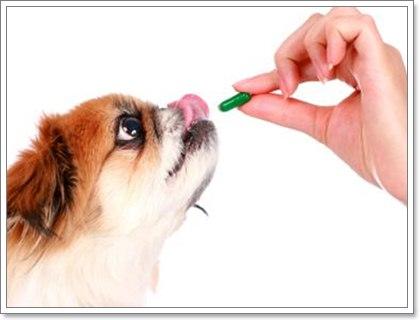 Dogilike.com :: 4 สุนัขกลุ่มเสี่ยงต้องระวัง...โรคตับอ่อนอักเสบ