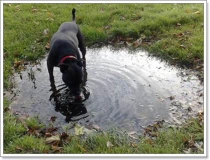 Dogilike.com ::  6 โรคสำคัญที่สุนัขและแมวเป็นร่วมกันได้