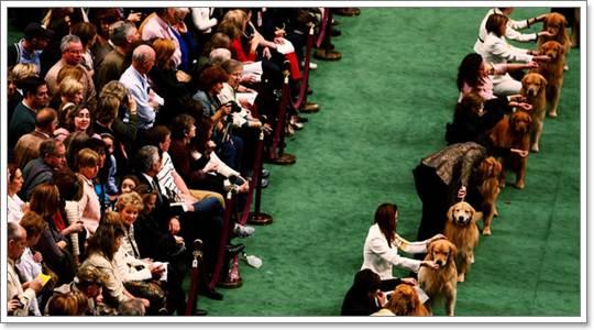 Dogilike.com :: 10 ความผิดปกติแต่กำเนิด ที่ไม่ควรเกิดในสุนัขประกวด
