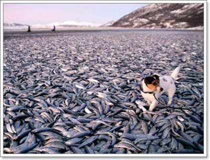 Dogilike.com :: รู้จักโรคสำคัญในสุนัข ที่ (อาจ) เกิดจากมลพิษในเมือง