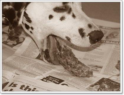 Dogilike.com :: ยาเบื่อหนู ... ภัยร้ายใกล้ตัวน้องหมา