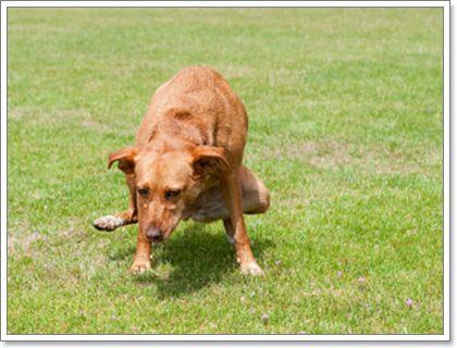 Dogilike.com ::  4 วิธีรับมือกับโรคนิ่วในทางเดินปัสสาวะสุนัข