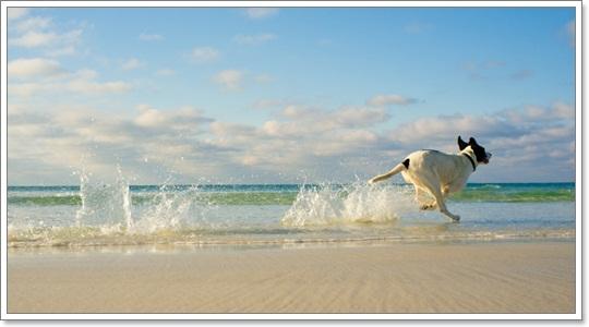 Dogilike.com :: สงสัยไหม? ถ้าสุนัขกินน้ำทะเล แล้วจะเกิดอะไรขึ้นกับร่างกายของเขา