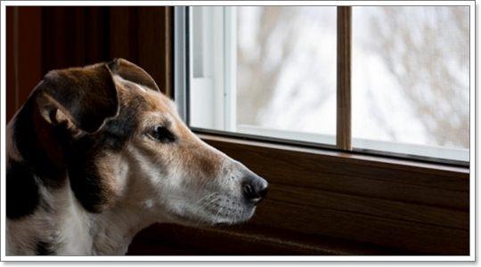 Dogilike.com :: ทำอย่างไร ... เมื่อน้องหมาอยู่ในภาวะวิตกกังวลจากการถูกแยก