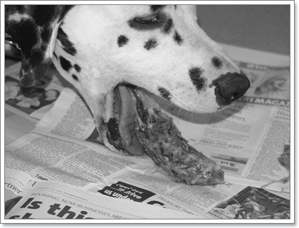 Dogilike.com :: 3 อาการป่วยที่เจ้าของสุนัขมักสับสน