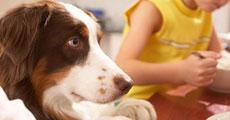 dog close-up, infographic, dog infographic, หมา, สุนัข, เสียหมา, สปอยล์หมา, สุนัขเลียมือ , นอนกับสุนัข