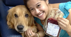 dog close-up, infographic, dog infographic, หมา, สุนัข, บริจาค, เลือด , บริจาคเลือด, ฉีควัคซีน, กรุ๊ปเลือด