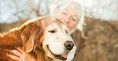 dog close-up, infographic, dog infographic, кар, йь╧я╒, ╨цт╗р╓, Юевм╢ , ╨цт╗р╓Юевм╢, ╘у╓гя╓╚у╧, ║цьЙ╩Юевм╢