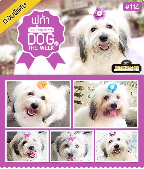 นัองหมา, สุนัข, น่ารัก, การดูแล,เทคนิคการเลี้ยงดู,ฟูก้า,Popular Vote,ตอนพิเศษ,LOVE & SHARE, เขียน Blog ,dog of the week 114
