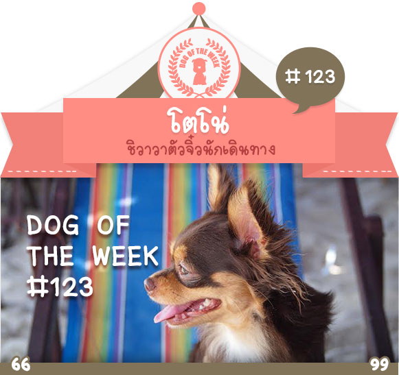 dog of the week 123