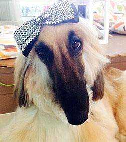 นัองหมา, สุนัข, น่ารัก, การดูแล,เทคนิคการเลี้ยงดู, ขี้อ้อน,น้องฟองดูว์,dog of the week 115