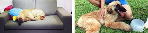 ��ͧ���, �عѢ, ����ѡ, ��ô���,�Ԥ�������§��, �����,��ͧ�ͧ����,dog of the week 115