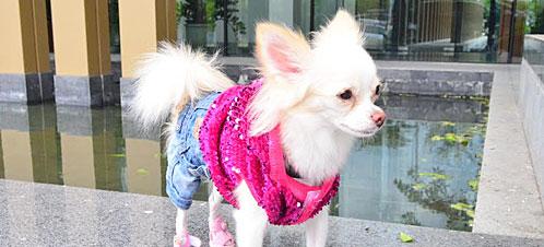 นัองหมา, สุนัข, น่ารัก, การดูแล,เทคนิคการเลี้ยงดู, ซาวี, แฟชั่น, นิสต้า, สาวเหนือ,  dog of the week 117