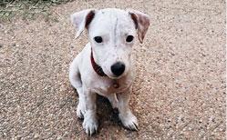 นัองหมา, สุนัข, น่ารัก, การดูแล,เทคนิคการเลี้ยงดู, เลม่อน, มันแกว, พี่น้องสุดซ่า, แสบ,   dog of the week 119