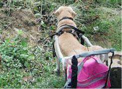 นัองหมา, สุนัข, น่ารัก, การดูแล,เทคนิคการเลี้ยงดู, ไรเฟิล, น้องหมาติดล้อ,  dog of the week 120
