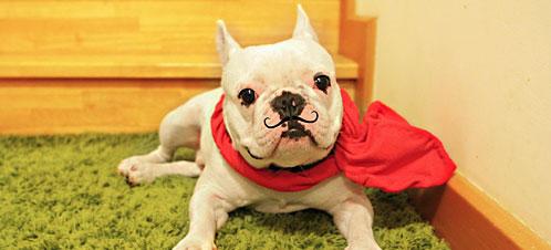นัองหมา, สุนัข, น่ารัก, การดูแล,เทคนิคการเลี้ยงดู,ปิแอร์ , ไอ้ดุกเผือก, dog of the week 121