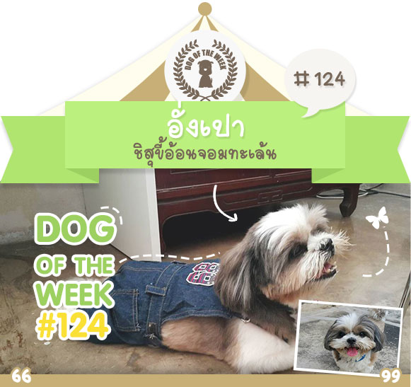 dog of the week 124