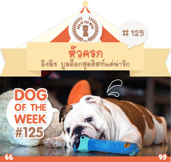 dog of the week 125
