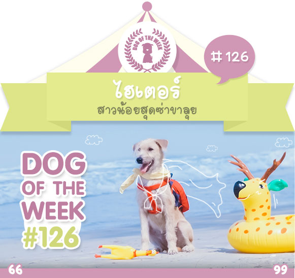 dog of the week 126
