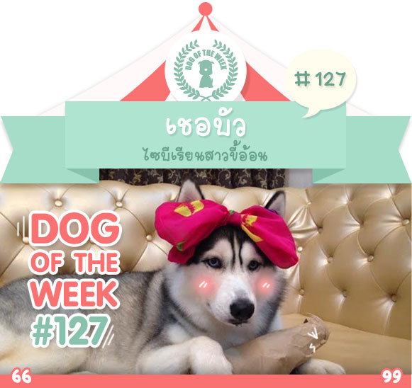 dog of the week 127