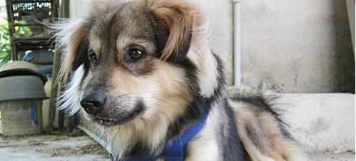 นัองหมา, สุนัข, น่ารัก, การดูแล,เทคนิคการเลี้ยงดู, ทองม้วน,นักขุด, สุดซ่า, รูปหล่อ,  dog of the week 130