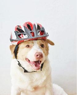 นัองหมา, สุนัข, น่ารัก, การดูแล,เทคนิคการเลี้ยงดู, บิลเกต,จมูกหมู,  dog of the week 131