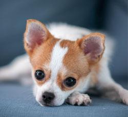 นัองหมา, สุนัข, น่ารัก, การดูแล,เทคนิคการเลี้ยงดู, ปอมปิโอ้,กาหยู, ดูโอ้คู่,แสบประจำบ้าน, dog of the week 132