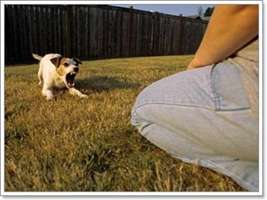 Dogilike.com :: พฤติกรรมสุนัขจร ที่คนรับเลี้ยงต้องแก้ไข