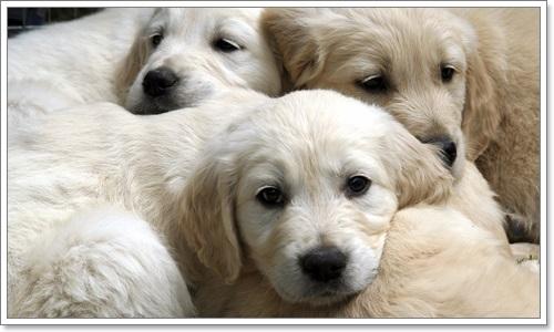 Dogilike.com :: ความผิดปกติของลูกสุนัขที่ผู้เลี้ยงไม่ควรมองข้าม