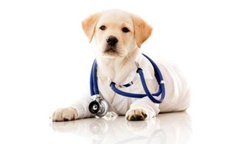 Dogilike.com :: การตรวจสุขภาพเบื้องต้นเมื่อรับลูกหมาใหม่มาเลี้ยง