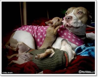 Dogilike.com :: ฮีโร่ข้างถนน ... วีรกรรมของน้องหมาจรจัดที่คุณจะต้องทึ่ง!!