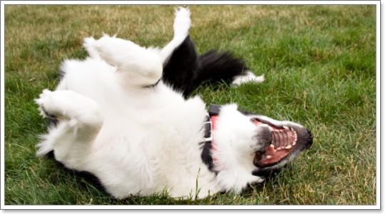 dog close-up, infographic, dog infographic