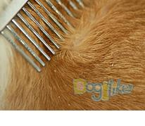 Bio-Groom, ไบโอกรูม, แชมพูสุนัข, Shawpet, ชอว์เพ็ท, แตกต่างที่สายพันธุ์, แตกต่างที่เส้นขน, Protein Lanolin, โปรตีน ลาโนลิน, ขนนุ่มลุ่มลื่น, ขนเงางามเปร่งประกาย, กรูมเมอร์มืออาชีพทั่วโลกแนะนำ, แชมพูสุนัขเกรดพรีเมี่ยม, นำเข้าจากอเมริกา, อาบน้ำ