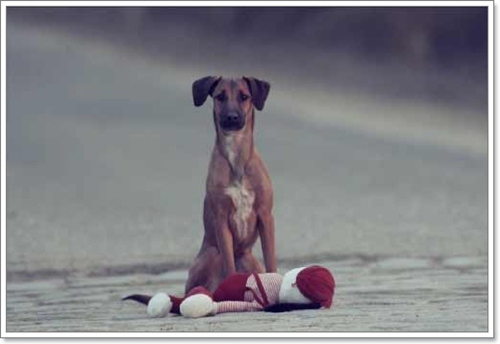 Dogilike.com :: สะเทือนใจ! หนังสั้นฮังการีสะท้อนความจริงของน้องหมาถูกทิ้ง!
