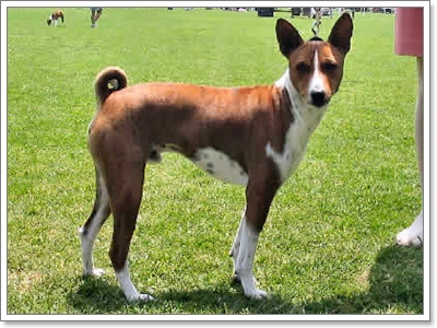 Dogilike.com :: เผย! 10 สายพันธุ์น้องหมาที่อินดี้โลกส่วนตัวสูงฝุดๆ