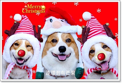 Dogilike.com :: ไม่มีใครยอมใคร! เซเล็บน้องหมากับชุดซานต้ามุ้งมิ้ง