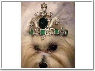 Dogilike.com :: 10 สิ่งของใช้แพงหูฉี่ ทำมาเพื่อน้องหมาโดยเฉพาะ!