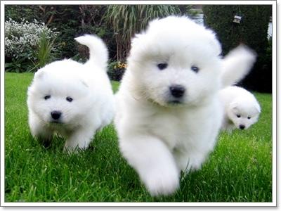 Dogilike.com :: 7 สายพันธุ์น้องหมา ที่ใครเลี้ยงแล้ว มักถูกมองว่า รวย!