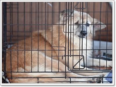 Dogilike.com :: เรื่องจริง! ที่คุณอาจยังไม่รู้ของน้องหมาในสถานสงเคราะห์