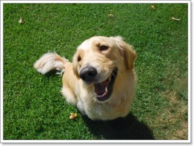 Dogilike.com :: รวมเด็ด! สารพันปัญหาเห็บๆ ที่ถูกถามถึงมากที่สุด