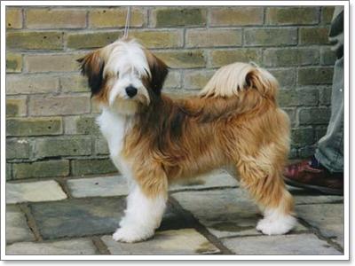 Dogilike.com :: รวมพล 10 สายพันธุ์ น้องหมาที่เก่าแก่ที่สุดในโลก!!