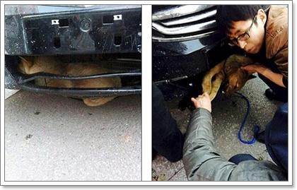 Dogilike.com :: 4 สิ่งที่คนรักน้องหมาต้องรู้ เมื่อคิดจะช่วยน้องหมาถูกรถชน
