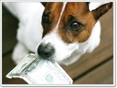 Dogilike.com :: 10 โอกาสดี ๆ ที่จะเข้ามา ถ้าเรามีน้องหมาในชีวิต