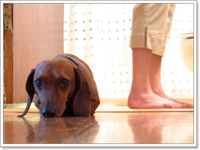 Dogilike.com :: 20  สิ่งในชีวิตประจำวันต้องระวังน้องหมาอาจแพ้ได้!
