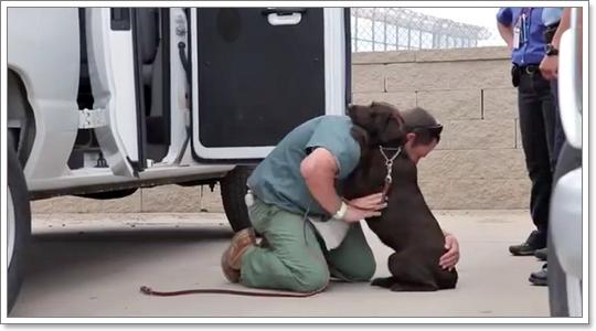 Dogilike.com :: สุดยอด 5 เรื่องน้องหมาปี 2015 สร้างแรงบันดาลใจให้ชีวิต
