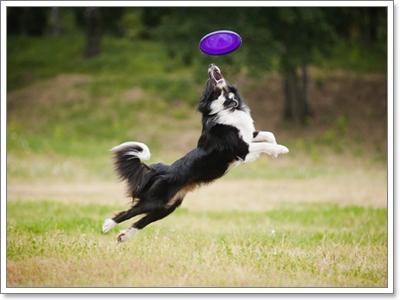 Dogilike.com :: รู้หรือไม่! สายพันธุ์น้องหมาที่คุณเลี้ยงเคยเป็นอะไรมาก่อน