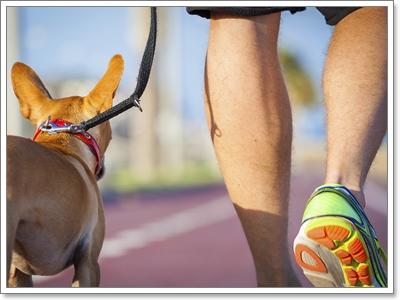 Dogilike.com :: เคยเห็นไหม!? น้องหมาอมเท้า จริง ๆ แล้วพวกเขาเป็นอะไรกันแน่!