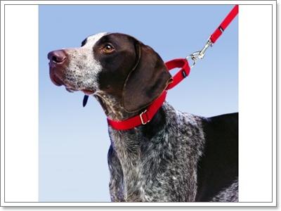 Dogilike.com :: เคลียร์ให้ชัด! เลือกปลอกคอยังไงให้เหมาะกับน้องหมา