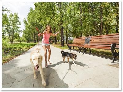 Dogilike.com :: น้องหมาเชื่อง จำเป็นไหมที่ต้องใส่สายจูงทุกครั้งที่ออกนอกบ้าน?