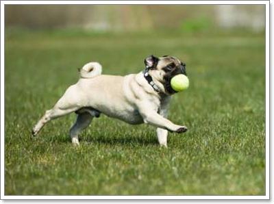 Dogilike.com :: เรื่องต้องรู้! ความรู้สึกแท้จริงของน้องหมาเมื่อถูกทิ้งให้อยู่ลำพัง
